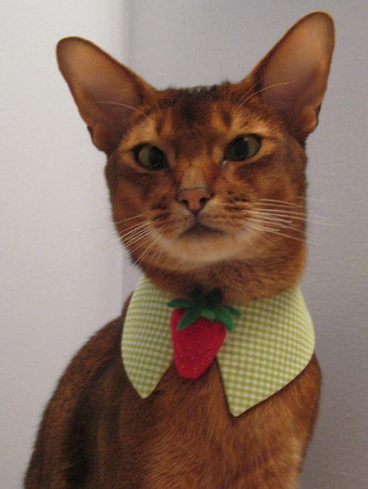 Если вы любите кошек,так как их люблю я, то вы точно оцените шарфики