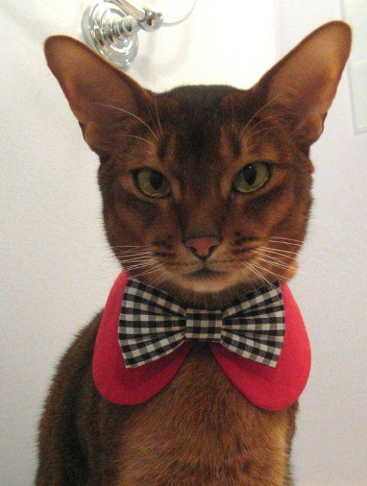 От CatAtelier (это модный дом, специализирующийся на одежде для кошек…