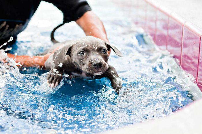 Спасение щенка (13 фото)