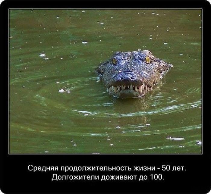 Факты о крокодилах (20 фото)