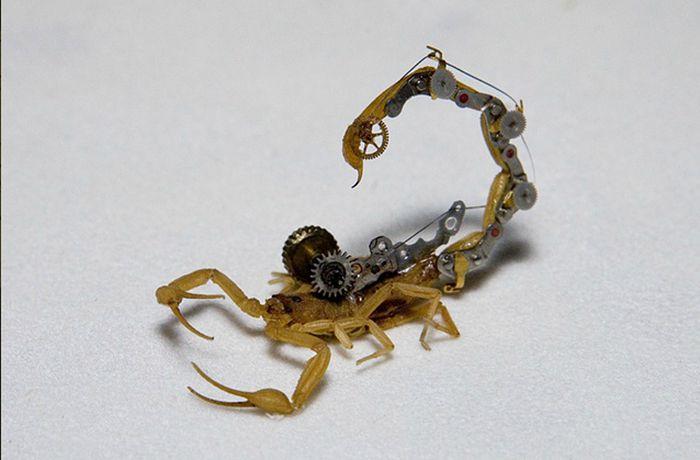 Стимпанк насекомые (27 фото)