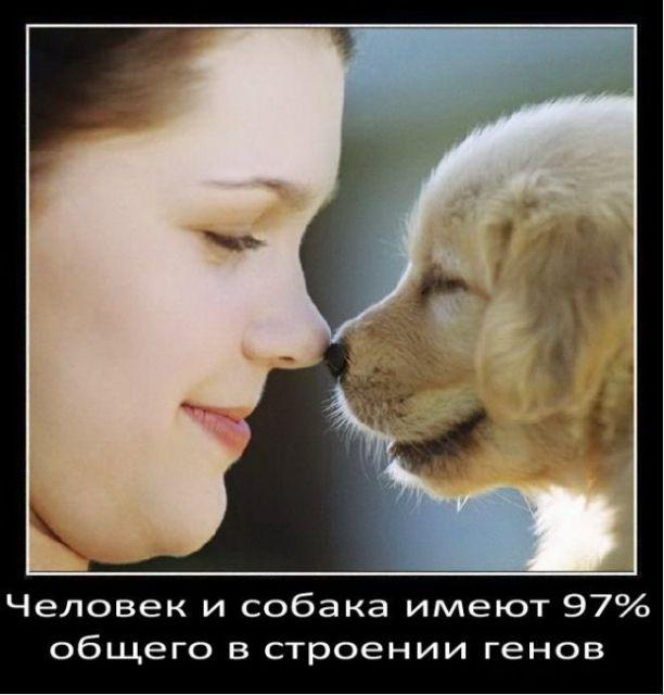 Факты о собаках (48 фото)