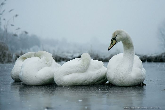 Красивые фотографии птиц (34 фото)
