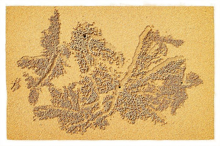 Необычные рисунки на песке (20 фото)