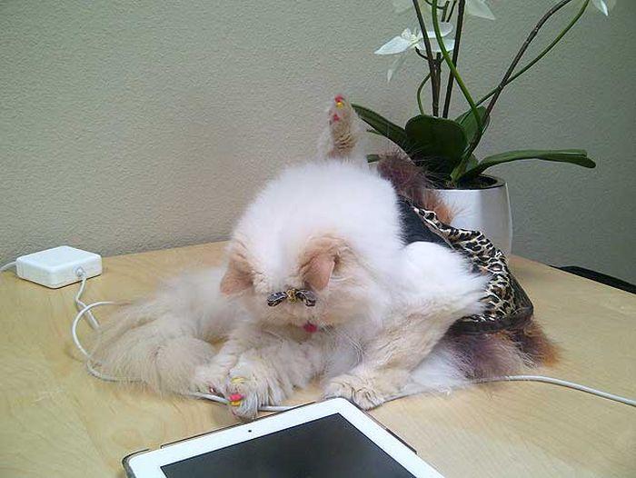 Забавная кошка (58 фото)