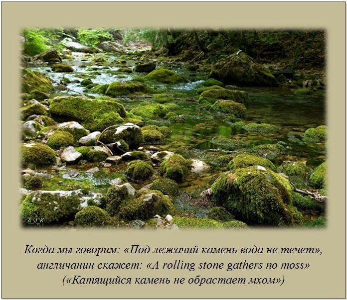 Картинка под лежачий камень вода не течет