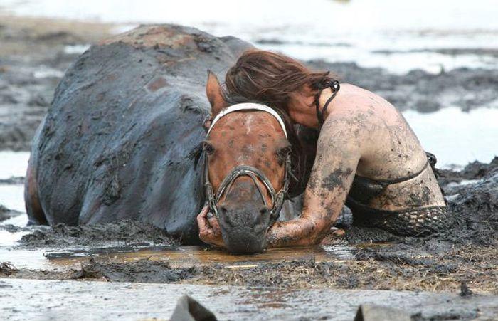 Спасение застрявшей лошади (11 фото)