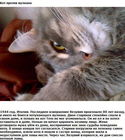 Коты-герои (4 рассказа)