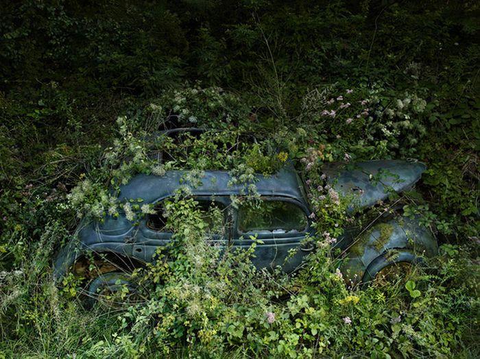 Природа атакует (31 фото)