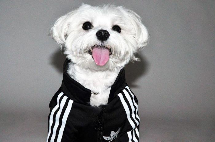 Собака в фирменном костюме (20 фото)