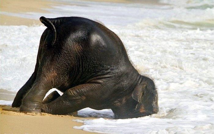 Слоненок освежился (7 фото)