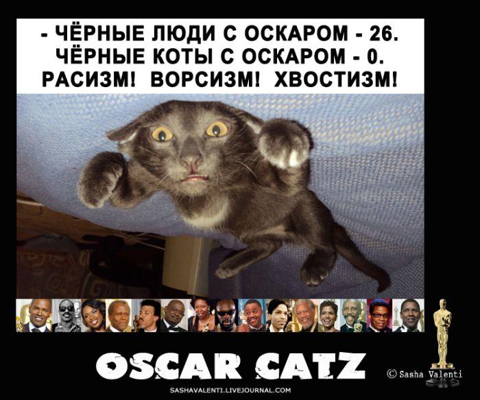 """Коты и """"Оскар"""" (7 картинок)"""