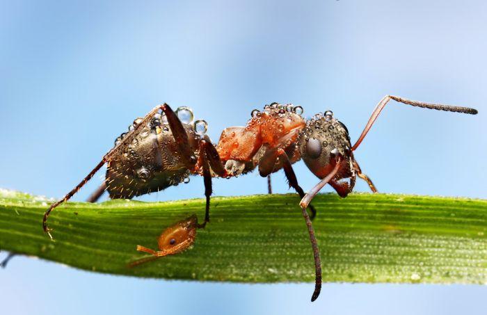 Макрофотографии насекомых, покрытых утренней росой(40 фото)