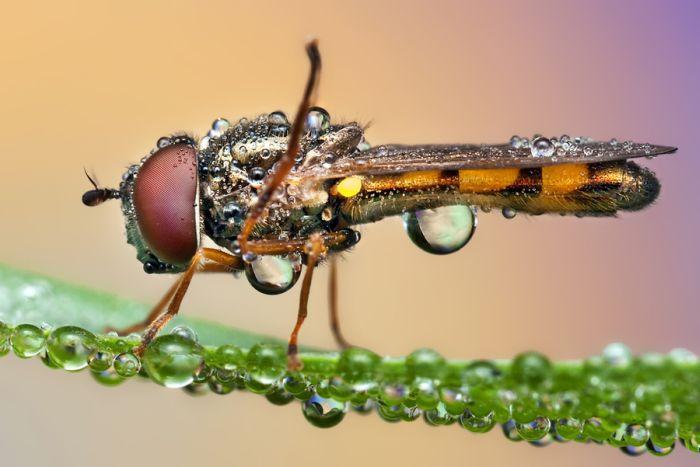 Насекомые в росе (40 фото)