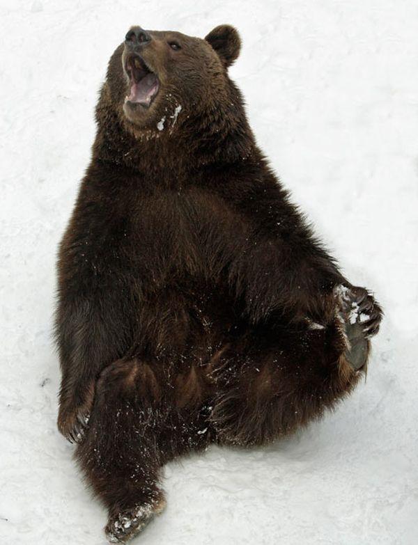 Забаные медведи (5 фото)