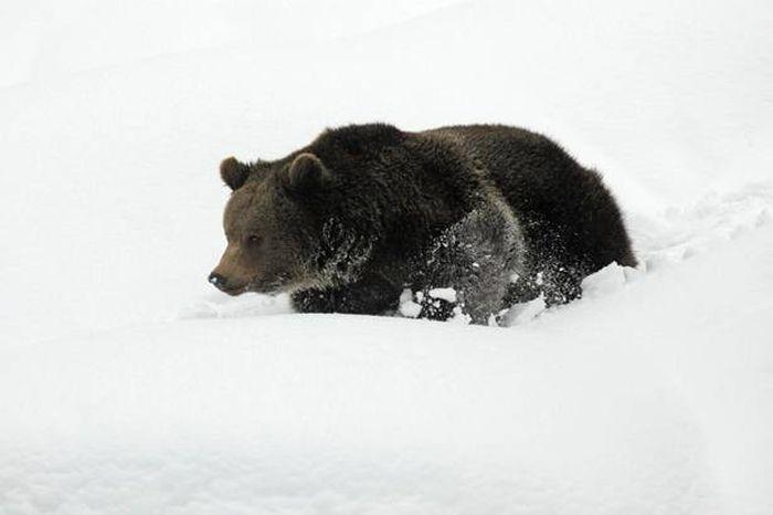 Забавные медведи (5 фото)