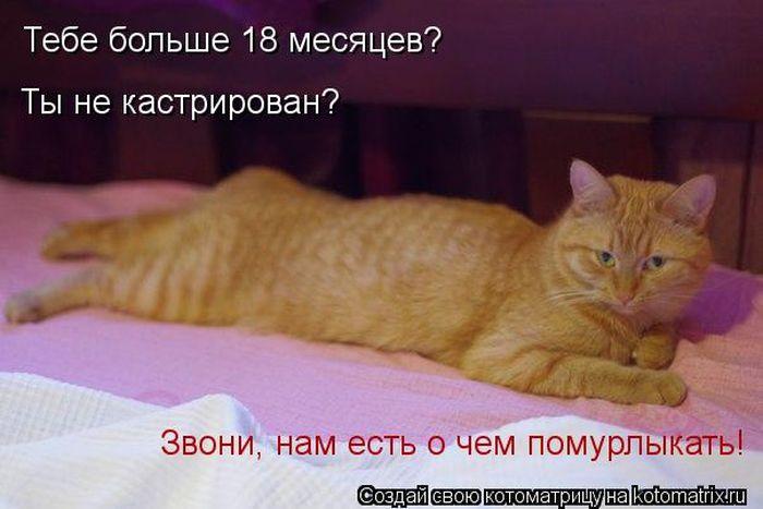http://trinixy.ru/pics5/20120308/kotomatrix_06.jpg