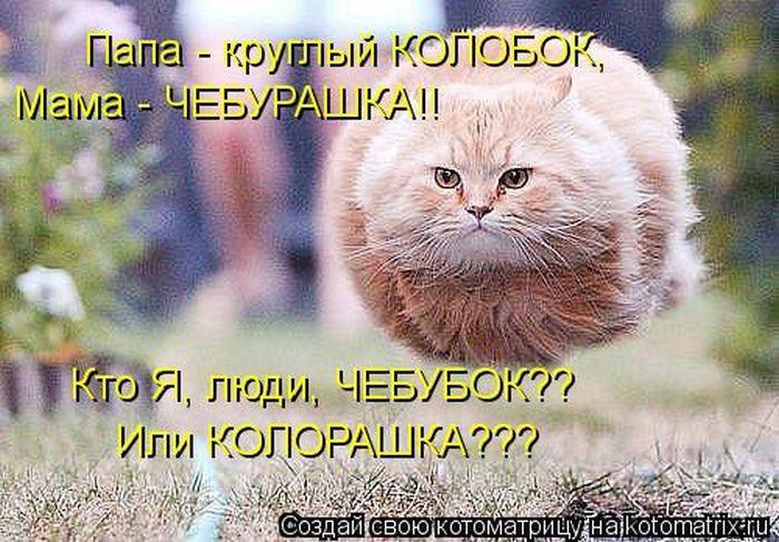 http://de.trinixy.ru/pics5/20120308/kotomatrix_10.jpg