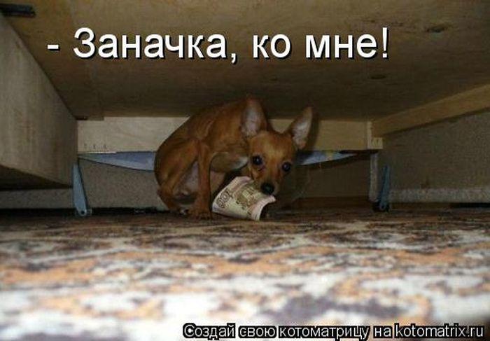 http://trinixy.ru/pics5/20120308/kotomatrix_17.jpg