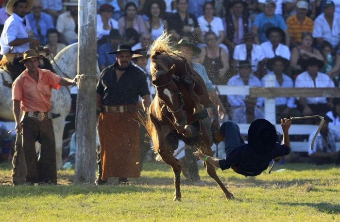 Свирепые лошади (20 фото)