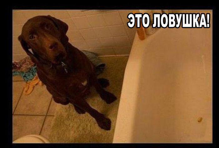 Умный пес (5 фото)