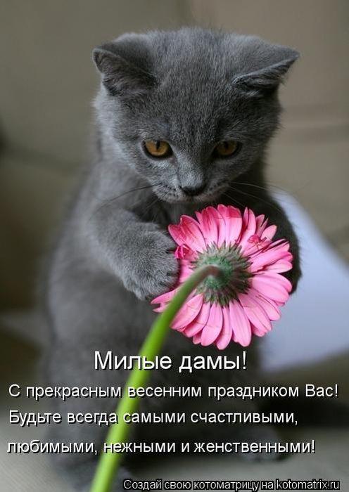Представляем вам коллекцию фотографий милых котов и кошек.  Эти милые животные уже очень