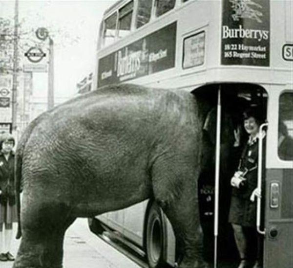 Приколы в общественном транспорте (24 фото)