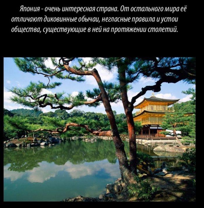 Интересная информация о Японии (7 фото)