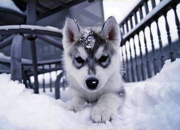 Sevimli Köpek Yavruları (42 Fotograf)