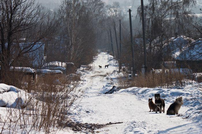 Заброшенное селение (22 фото)