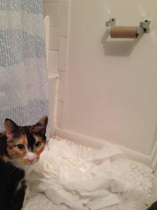 Прикольный кот (21 фото)