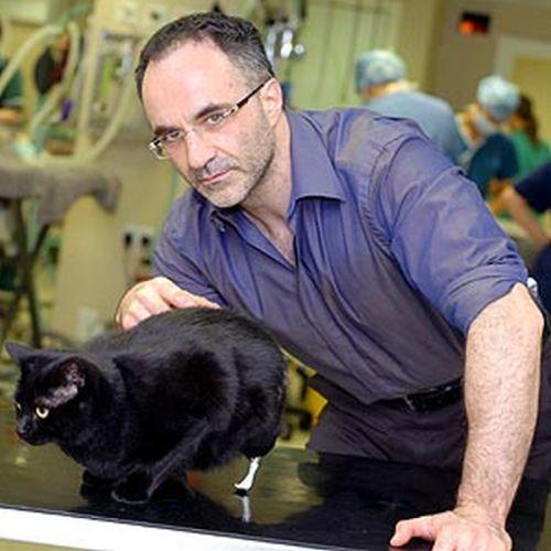 Кот с протезами (10 фото)