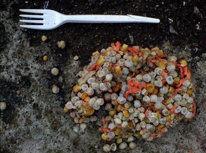 Картинки, которые отбивают аппетит (51 фото)