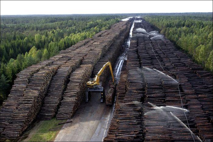 Хранилище Пиломатериалов на юге Швеции (6 фото)