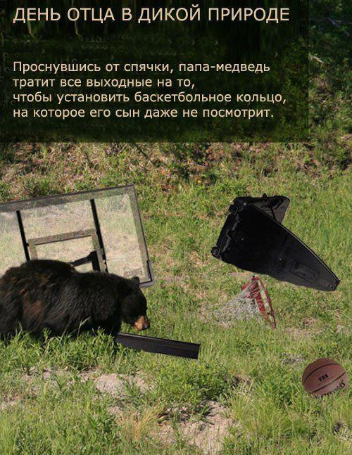 Забавные факты о природе (9 картинок)
