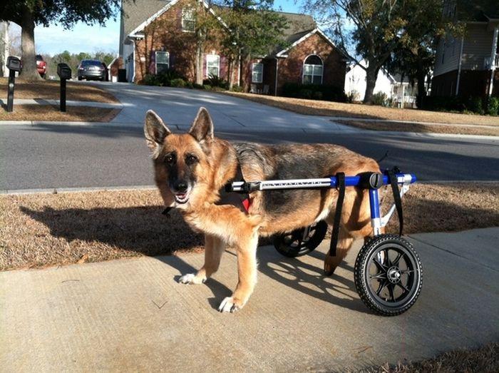 Сильные собаки (21 фото)