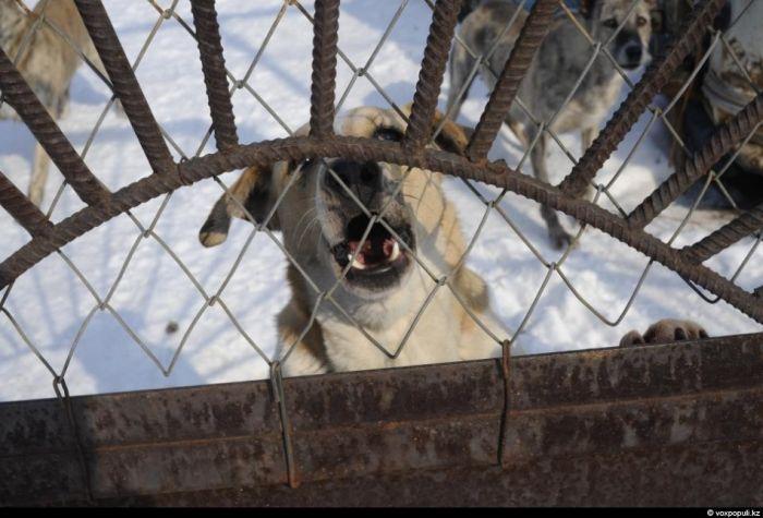 50 собак в одном доме (25 фото)