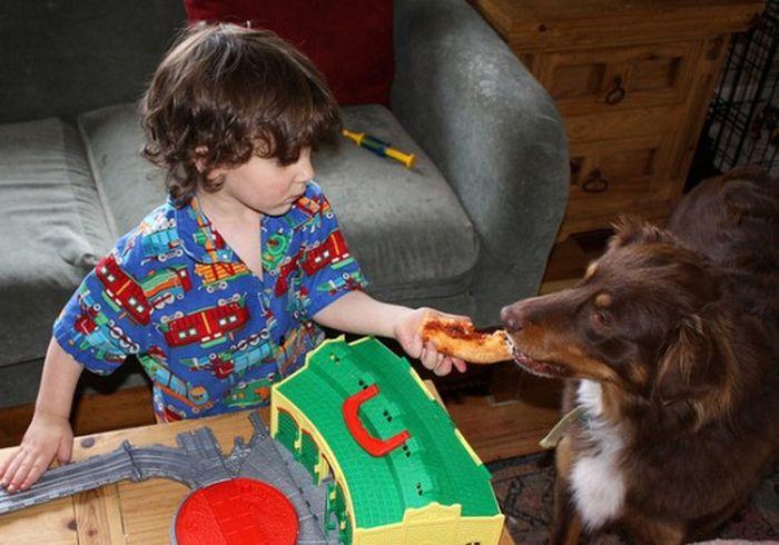 Собаки, которые любят пиццу (20 фото)