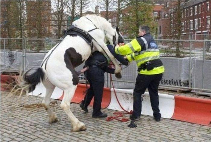 Полицейский-неудачник (2 фото)