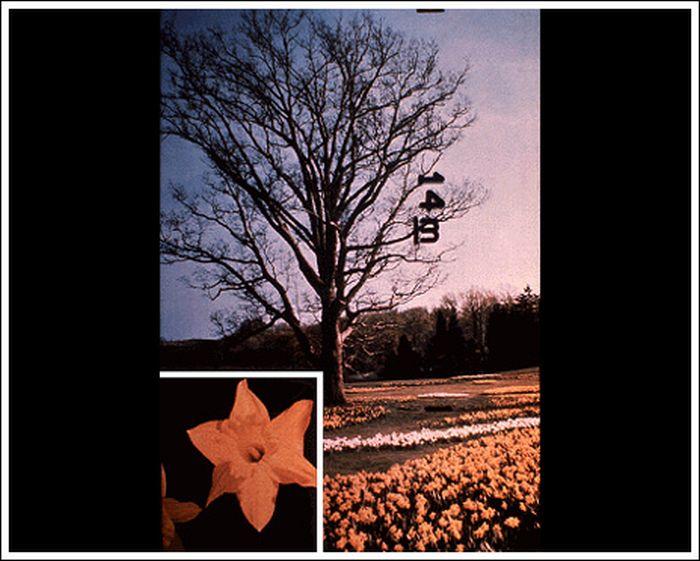 """Золотая пластинка """"Вояджера"""" (126 фото)"""