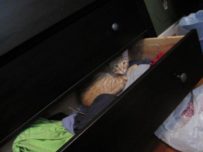Прячущиеся коты (50 фото)