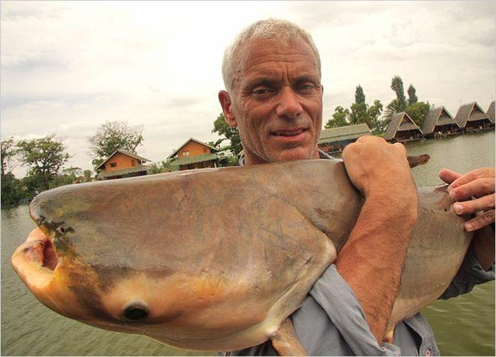 Monstruos del Río. Discovery en imagenes.