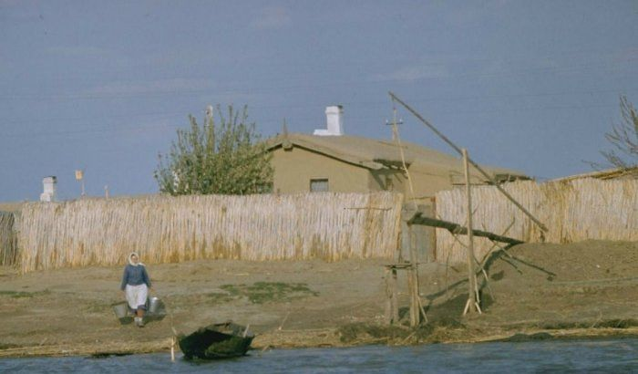 Добыча черной икры во второй половине XX века (20 фото)