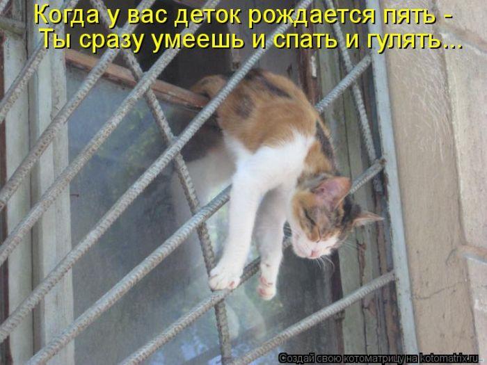 http://de.trinixy.ru/pics5/20120406/kotomatrix_15.jpg