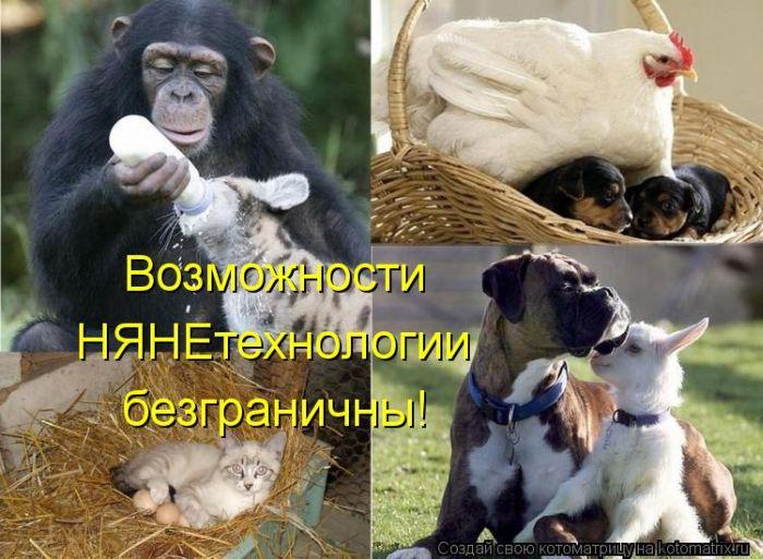 http://de.trinixy.ru/pics5/20120406/kotomatrix_27.jpg