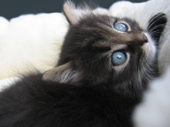 Славные котята (100 фото)