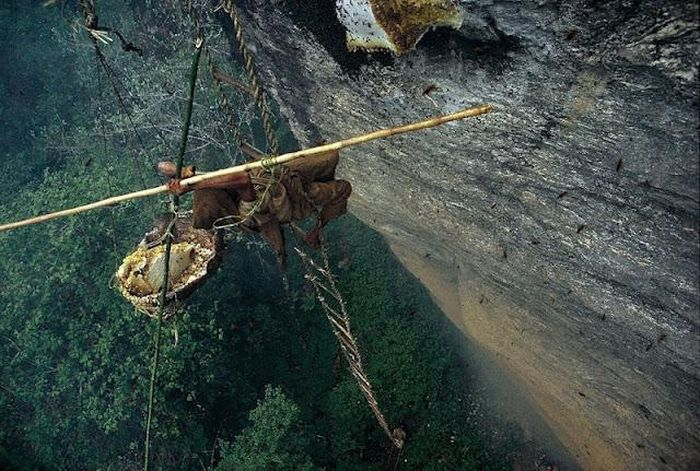 Добыча дикого меда вНепале (13 фото)
