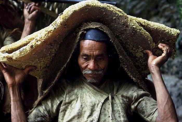 Добыча дикого меда в Непале (13 фото)