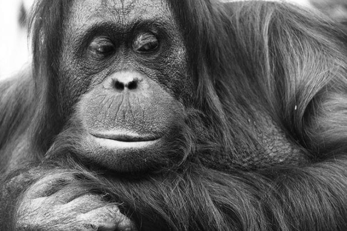 Черно-белые фотографии животных (50 фото)
