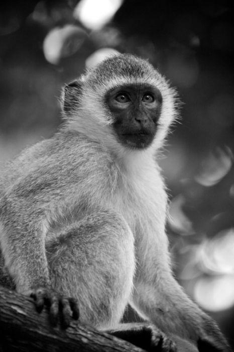 ЧС'рно-белое фото животных от Nicolas Evariste.